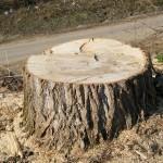 14 Спил деревьев 2) фото