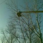 14 Спил деревьев 5) фото