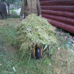 34 Покос травы, бурьяна 5) фото